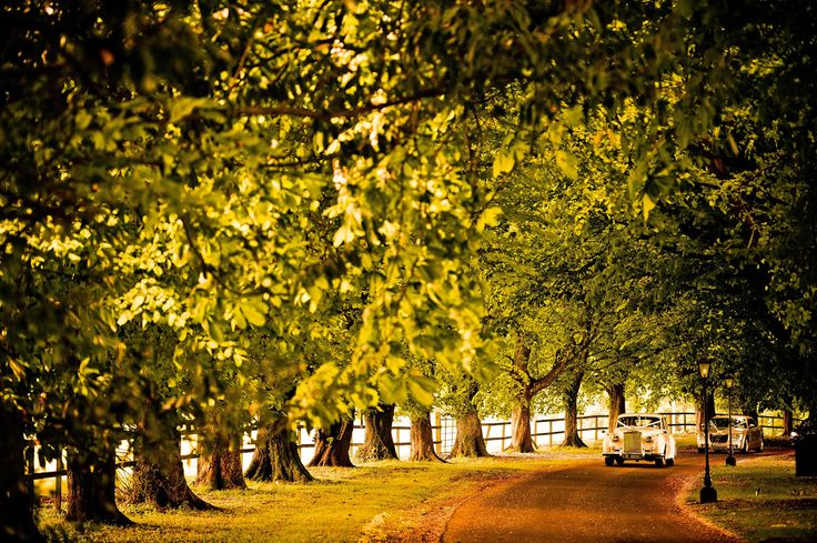 Make an entrance to Waterford Castle Hotel! Our lovely tree-lined avenue is a joy through all seasons...