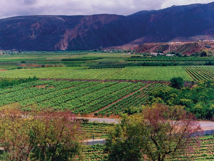 Vineyards at Calitzdorp, Little Karoo, Western Cape, South Africa