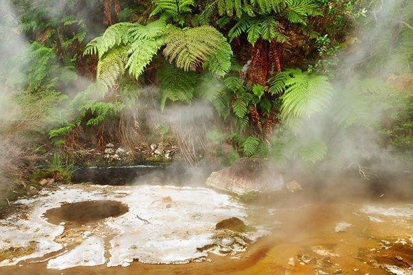 Waimangu Volcanic Rift Valley Photo - Hot spring in volcanic valley Waimangu