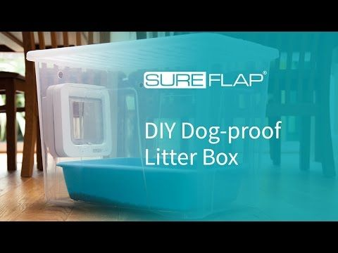 How To Stop Cat Litter From Sticking To The Box