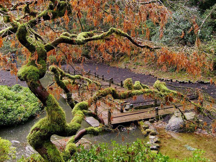 Portland_Japanese_Gardens_7