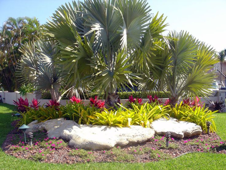 15 best florida landscape ideas images on pinterest for Florida backyard landscaping ideas