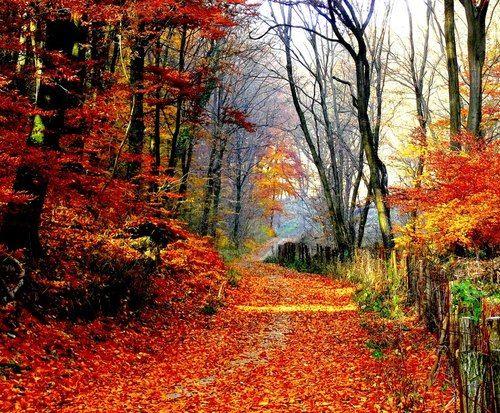 Autumn Tale, Varpalota (Veszprem, Hungría)