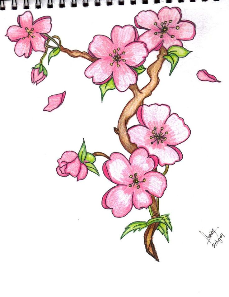 Sakura Flower Drawing
