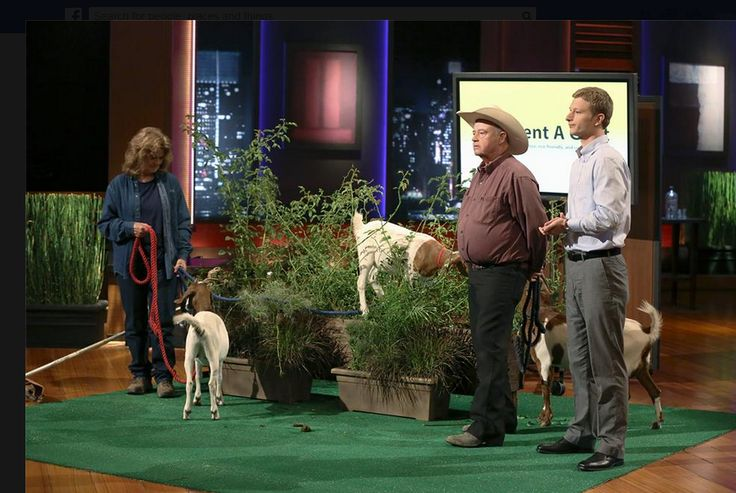 This shark tank product was about renting goats. Click the picture to see how you can see the full episode  click pin, like, and comment  #sharktank #sharktankproduct