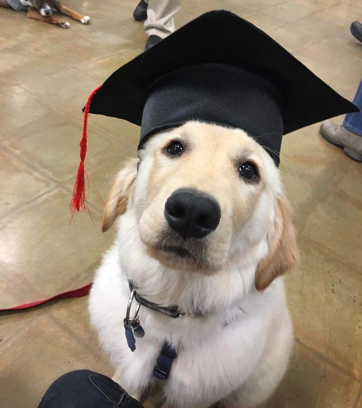 Puppy school graduate