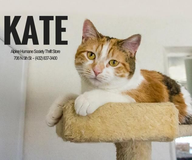 Kate Located At Alpine Humane Society In Alpine Tx Spayed