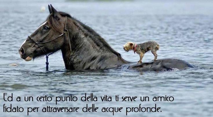 ..nella vita serve un amico fidato per attraversare delle acque profonde