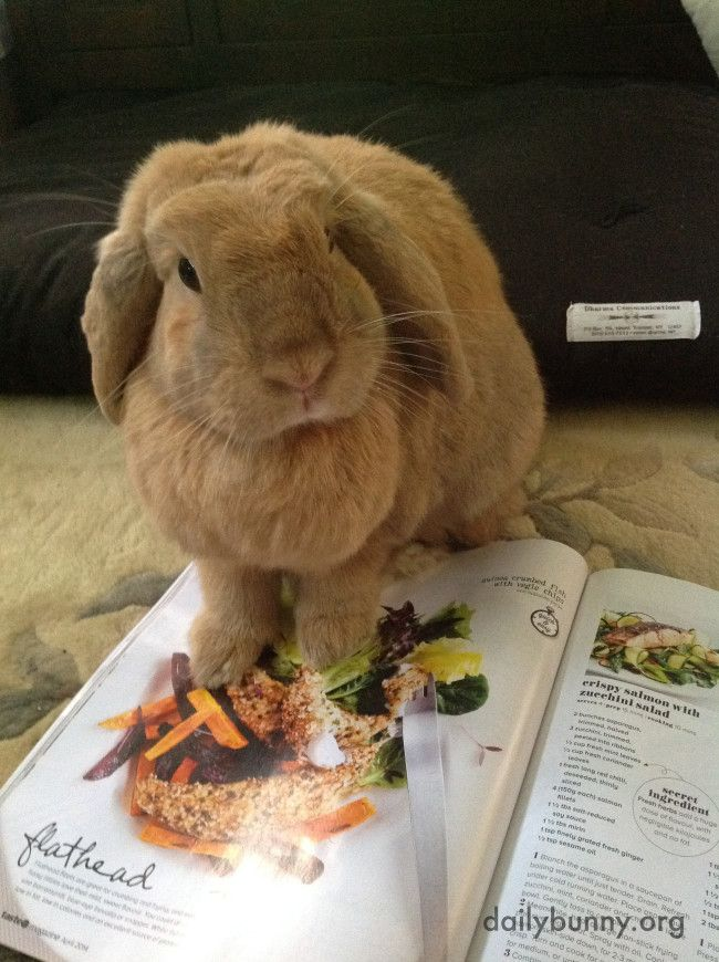 Bunny picks out the salad she wants for dinner - April 19, 2014