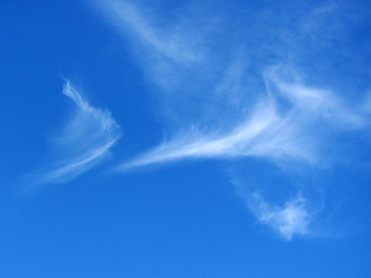 Wolke / cloud