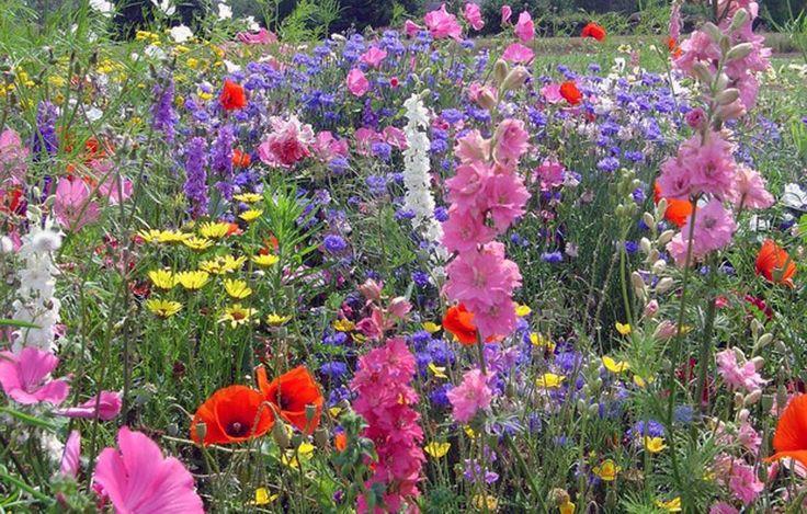 Miscugli e nomi di fiori per prato fiorito