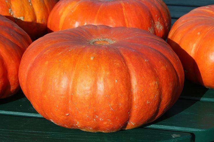 Pumpkin: An orange nutritive veggie https://www.medkumo.com/2017/03/15/pumpkin-an-orange-nutritive-veggie-health-tips-medkumo