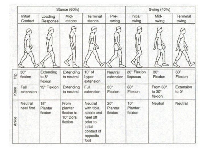 14 Best Images About Gait Analysis On Pinterest