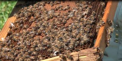 Tο Κέντρο Μελισσοκομίας Πελοποννήσου ενημερώνει τους μελισσοκόμους ότι ξεκίνησε η υποβολή των αιτήσεων για την ένταξή τους στις δράσεις 3.1«Εξοπλισμός για την διευκόλυνση των μετακινήσεων» ( Αντικατάσταση κυψελών) , και 3.2 «Οικονομική στήριξη της νομαδικής μελισσοκομίας» (Μετακινήσεις μελισσοσμηνών) για το έτος 2017.#Εύφορη_Γη #eforigi