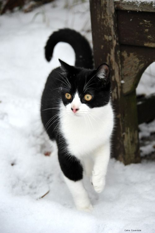 """mostlycatsmostly: """" Chilly paws (by PhotoCet) """""""
