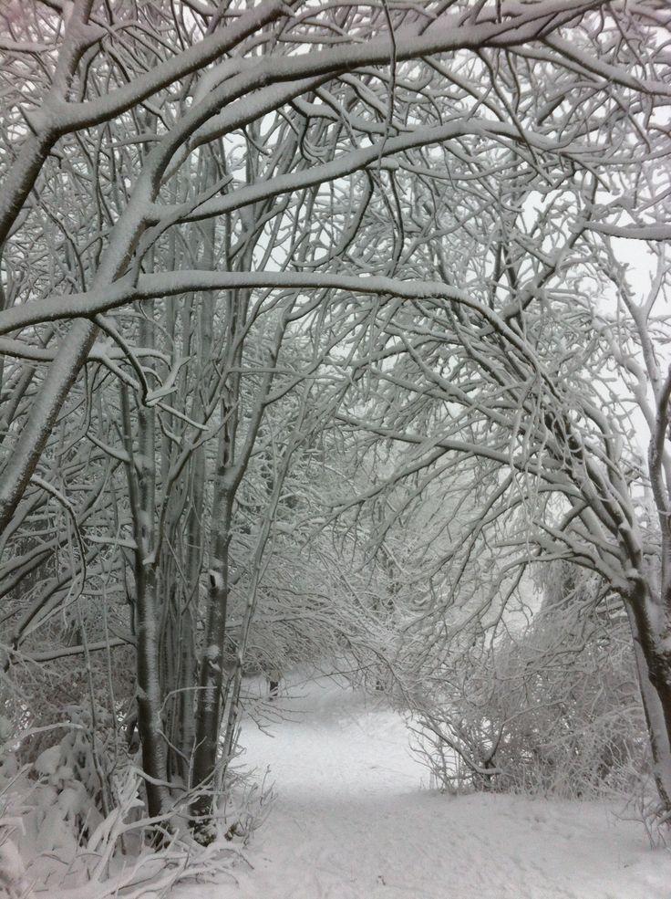 snow white way. winter berg