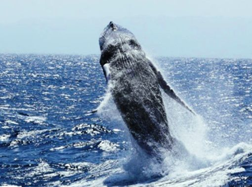 Whale watching in Puerto Plata Dominican Republic
