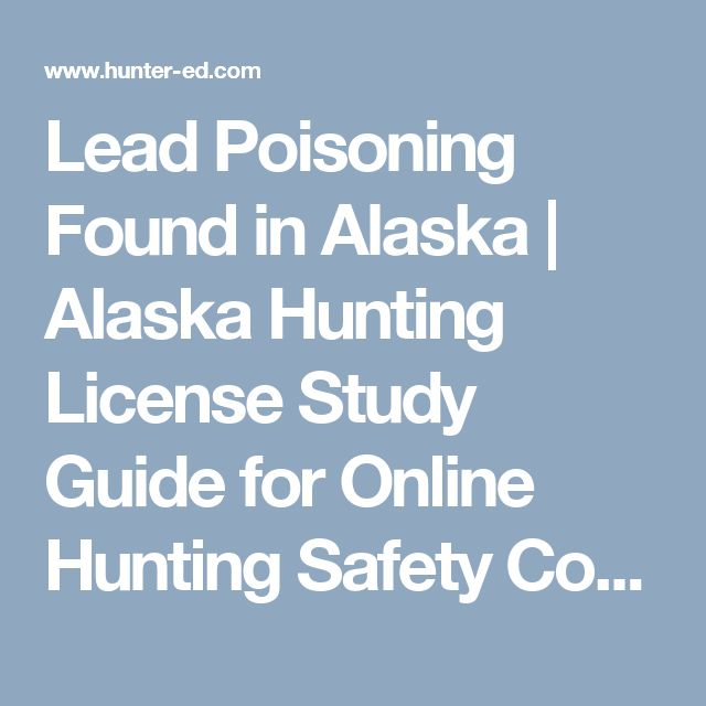 Lead Poisoning Found in Alaska | Alaska Hunting License Study Guide for Online Hunting Safety Course