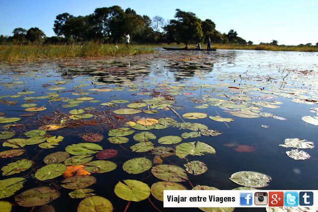 Viajar entre Viagens: Explorando o Delta do Okavango
