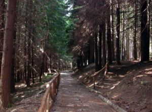 Sentieri dell'Orecchiella in provincia di Lucca