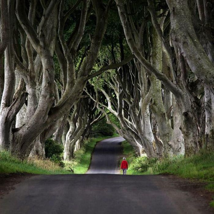 Antrim, Northern IrelandThe Roads, Paths, Walks, Little Red, Old Trees, Catalonia Spain, Red Riding Hoods, Northern Ireland, Places