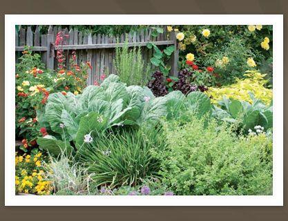 Front Yard Edible Garden Ideas 139 best edible landscaping images on pinterest   garden ideas