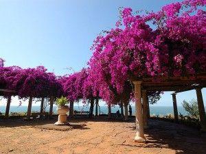 Lourenço Marques (Maputo) - Moçambique (I remmember this garden!)
