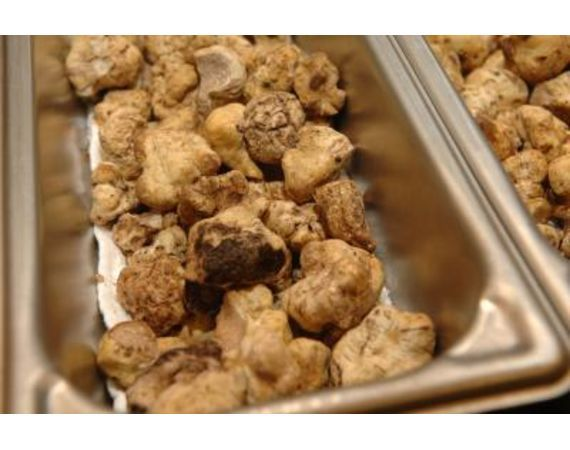 85 repins! The awesomely revered Truffle Mushroom can cost as much as $400 a piece/ How to Grow White Truffles   eHow.com