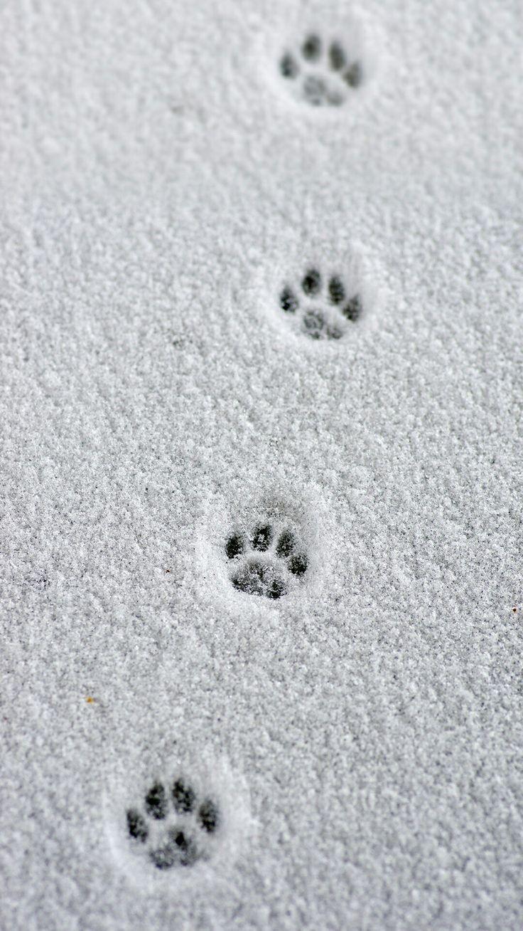 Little paw prints