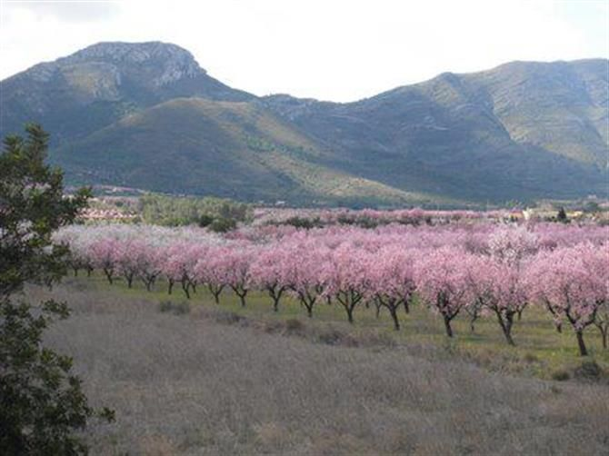 Blossom in spring in the Jalon Valley