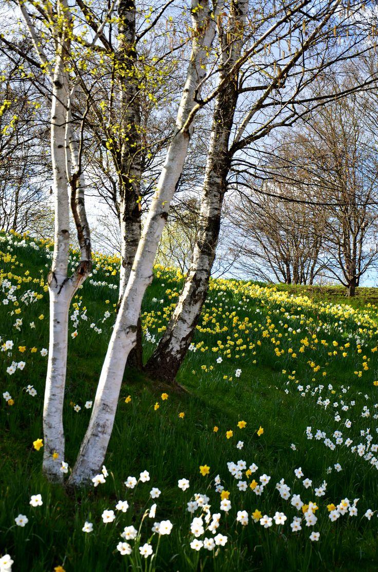 La primavera... bella...❄