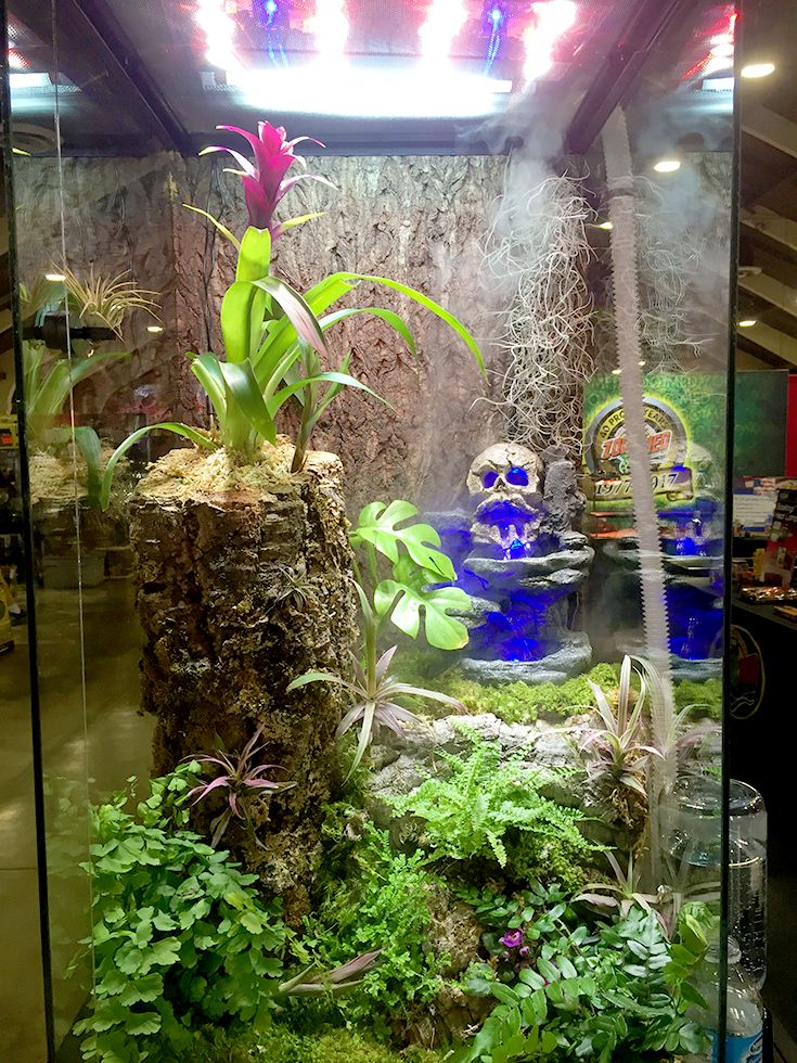 115 Best Terrariums Images On Pinterest Reptiles