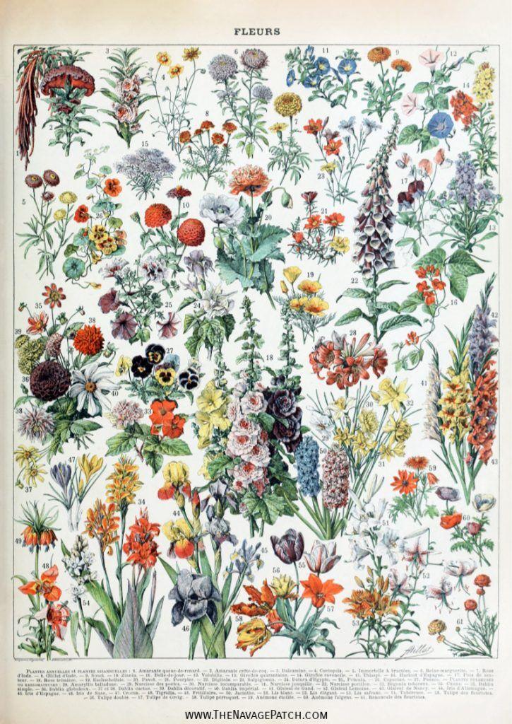 Amazing Free Vintage Botanical Prints Vintage Botanical Prints Botanical Prints Free Vintage Art Prints