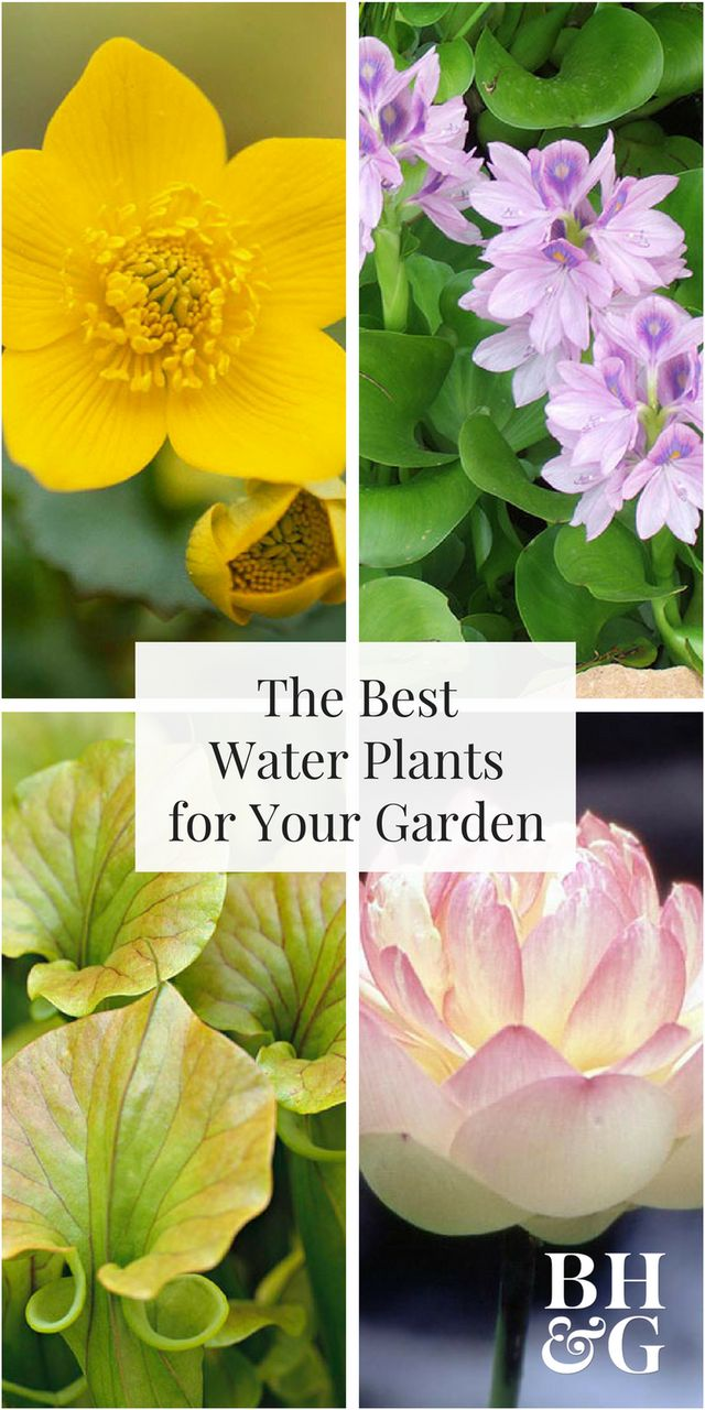 This handy list will help you determine which water plants will work best in your water garden. Plus, get design ideas and tips to help your water plants flourish in your landscape.