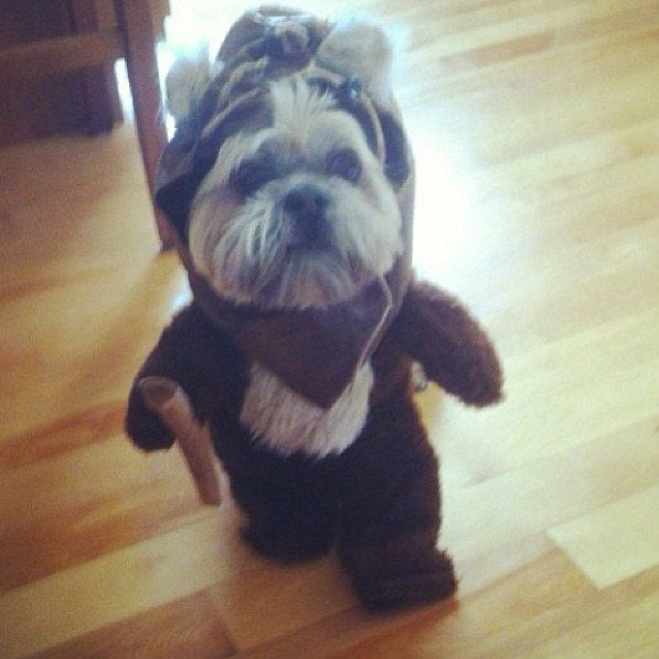 best 25 ewok dog costume ideas on pinterest. Black Bedroom Furniture Sets. Home Design Ideas