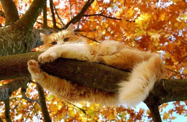 картинки коты осень утро обновлению фрея