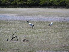 Toora - Wilsons Prom & surrounds   Prom Country   Accommodation   Yanakie   Sandy Point   Inverloch