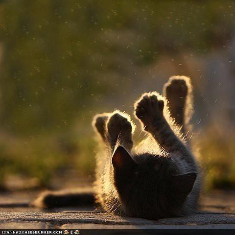sunshine: Lights, Pet Photography, Sun Ray, Baby Animal, Sunray, Kitty, Cute Kittens, Photography Tutorials, Cat Photos