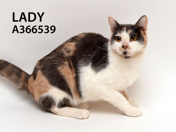 Lady id a366539 is a very pretty and dainty 10 month