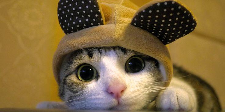 gatico con orejitas