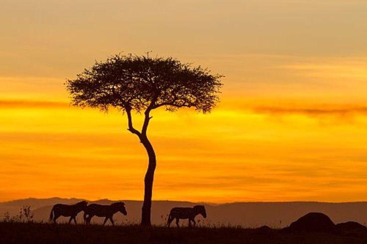 Los cinco mejores safaris de África · National Geographic en español. · Actualidad Viajera