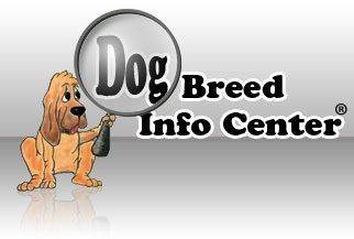 Dog Breed Info Center® is your one-stop shop for dog information. It is entertaining and informative all at the same time. The number one cause of death in dogs today is euthanasia. A dog's temperament is a direct result of its owner's ability to understand him...