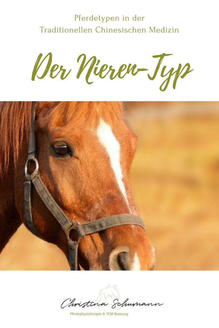 Der Nieren Typ Das Intelligente Sensibelchen Pferde Pferdekrankheiten Traditionelle Chinesische Medizin