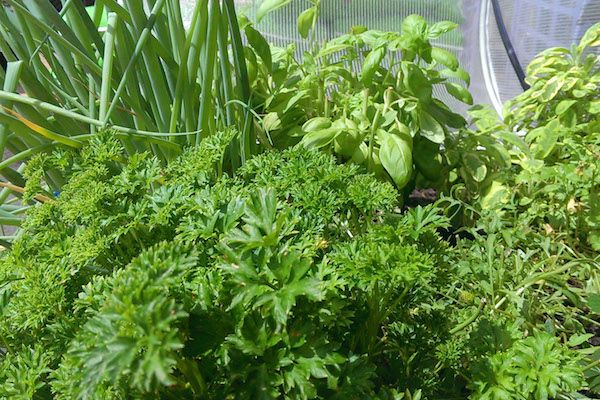 Raised Beds Versus In-Ground Gardening - Vegepod