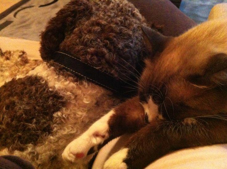 Billy and capuucino , sleep
