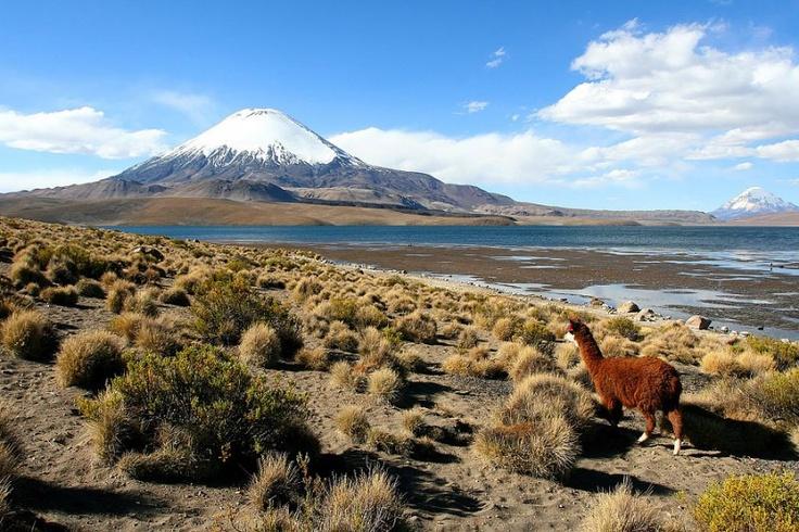 Chile - Lago Chungara