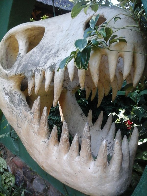 Replica dinosaur skull at the entrance to the Sudwala Caves in Mpumalanga. South Africa