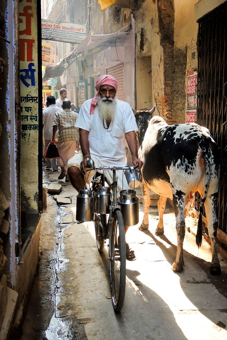 To the milk market, India - by Dick Verton
