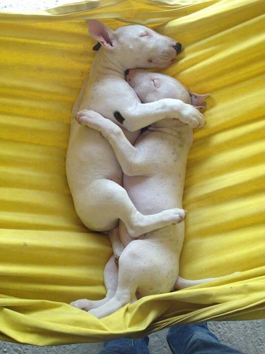 Look at them!! So cute! I will own one of these dogs before I die!!!!