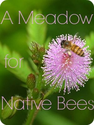 A Meadow for Bees   The 104 Homestead - Did you know you can create a happy habitat for your local bees? They'll thank you with amazing gardens.